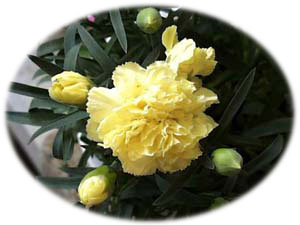 <b>5月26日</b>の誕生花
