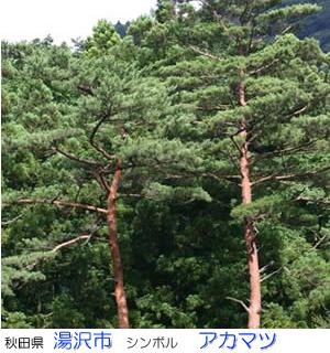 清國勝雄の画像 p1_20
