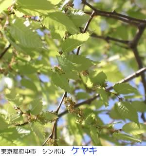 毬藻えりとは - goo Wikipedia (ウィキペディア)